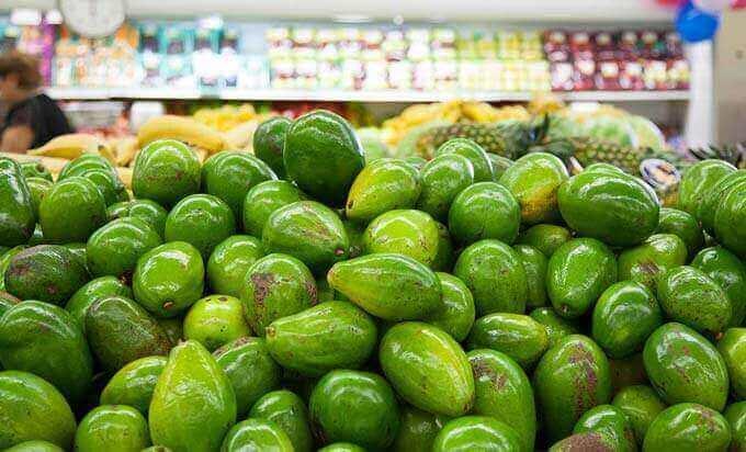 Abacate   Benefícios do Óleo de Abacate para Saúde