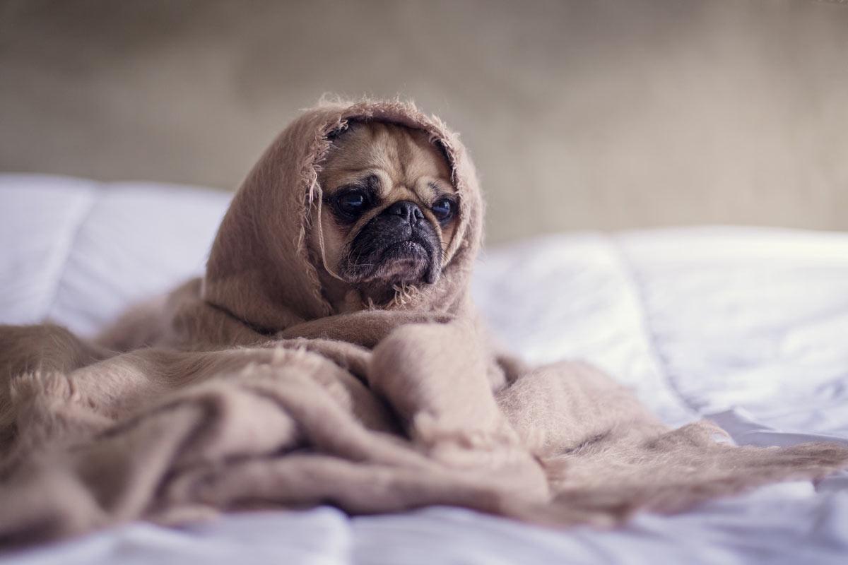 Alergia a Cachorro: Sintomas, Causas, Tratamentos e Dicas