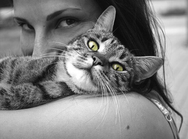 Alergia animal de estimação