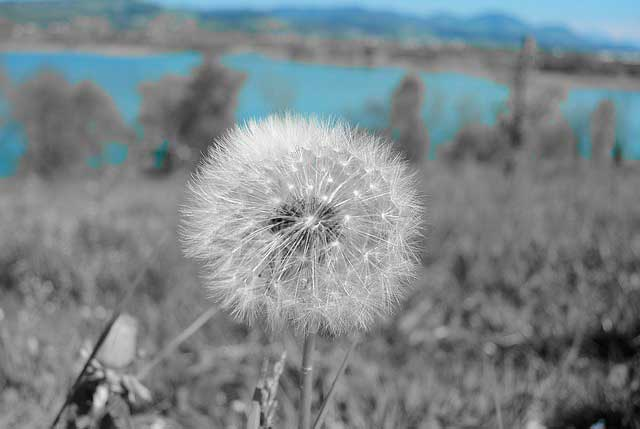 Alergia: Anti-histamínicos ou descongestionantes