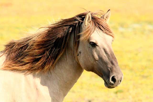 Alergia a Cavalos | Causas, Sintomas e Tratamento