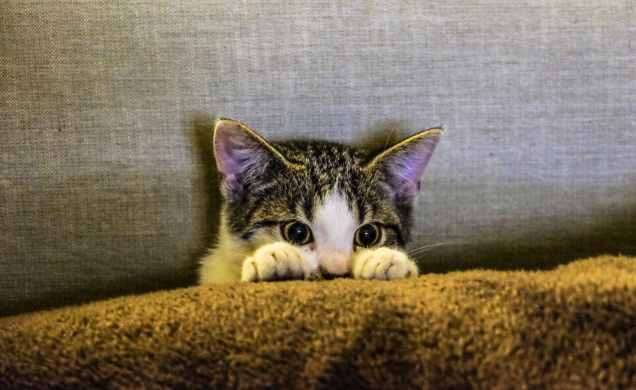 Alergia de Gato | Causas, Sintomas e Tratamento