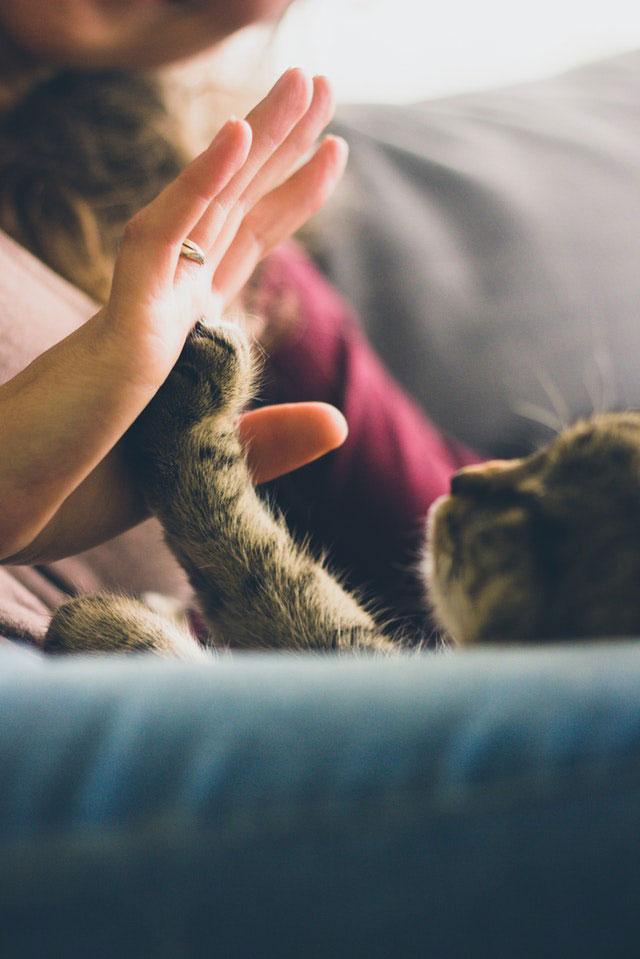 Alergia de gato