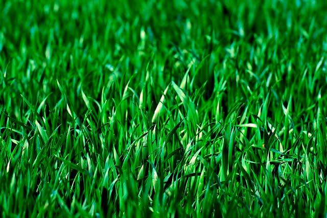 Alergia à grama | Causas, Sintomas e Tratamento