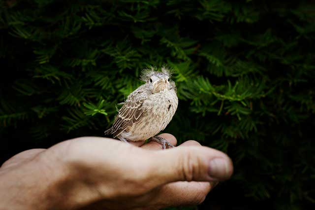 Alergia a pássaros | Causas, Sintomas e Hipersensibilidade