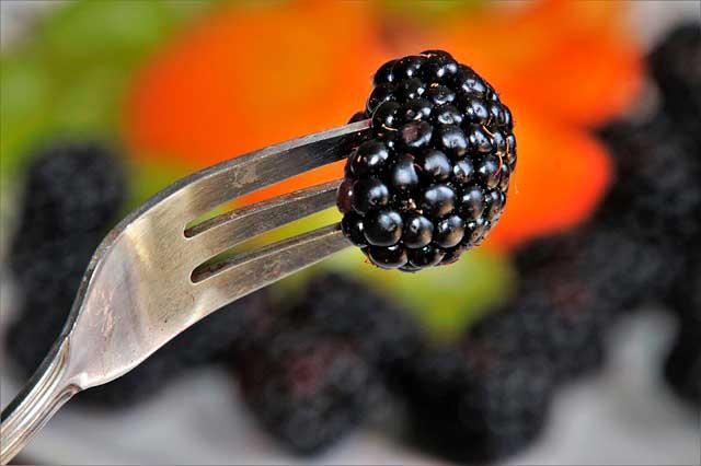 Alergia aos Salicilatos de amora-preta | Reação ao Salicilato