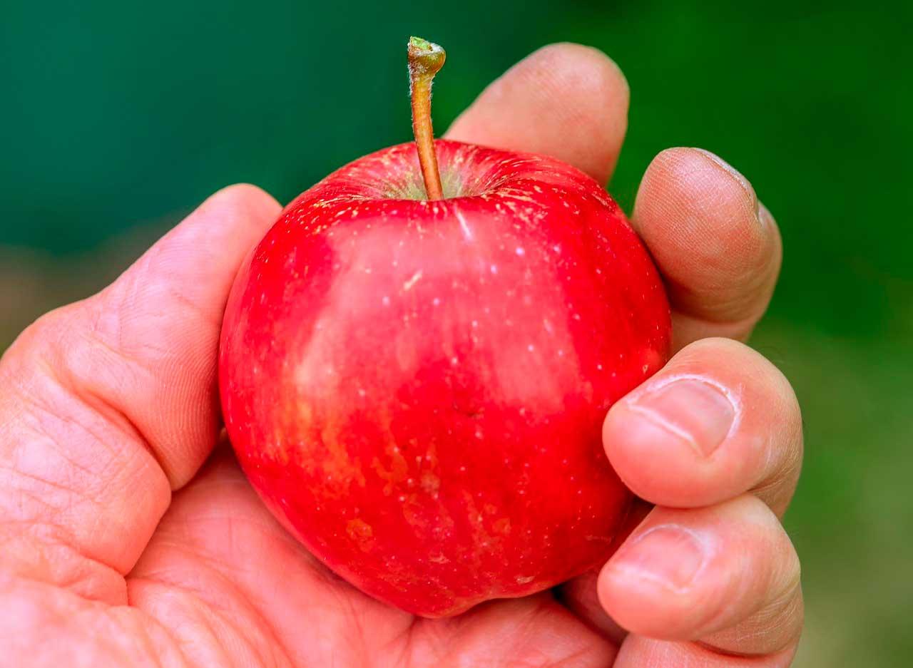 Alergias de Frutas e Vegetais | Sintomas e Diagnóstico