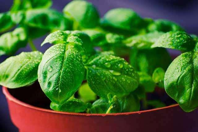 Alimentos para curar o cólon