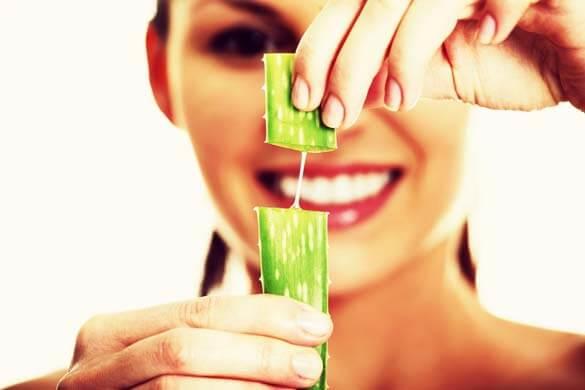 Aloe Vera - Benefícios, Tratamentos e Contraindicações
