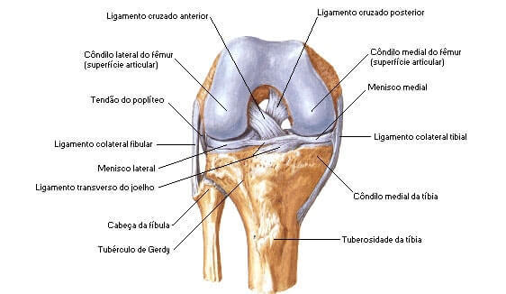 Anatomia do Joelho - Dor no Joelho ao Agachar