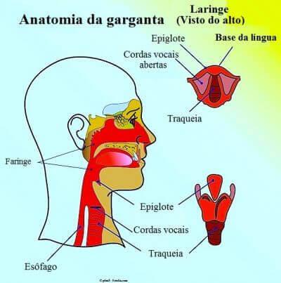 Anatomia da Garganta - O que pode ser a Sensação de Aperto na Garganta, ou se sentir com um Nó na Garganta?