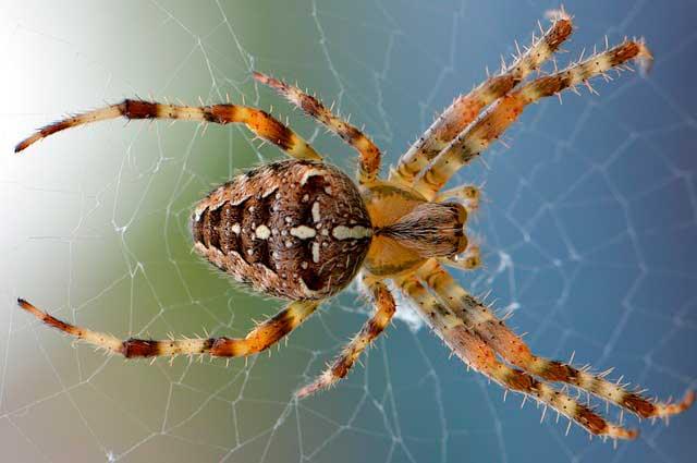 Aracnofobia | Entendendo o medo das aranhas