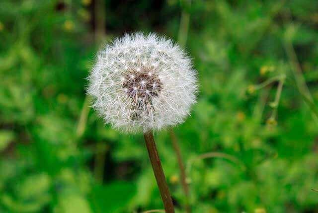 Asma | Reconhecer e Tratar os Sintomas de Asma