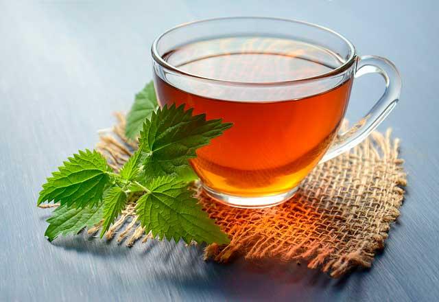 Os benefícios do anamu | Um remédio herbal com múltiplos usos