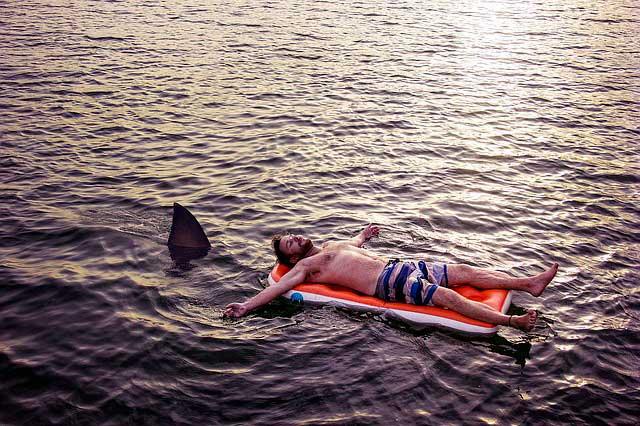 Cartilagem de tubarão | Benefícios e usos para a saúde