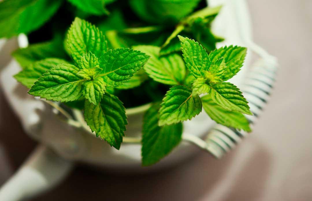 5 Benefícios para a saúde ao consumir hortelã