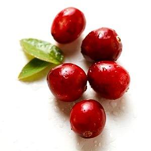 Cranberry - Efeitos Terapêuticos e Prevenção da Infecção Urinária