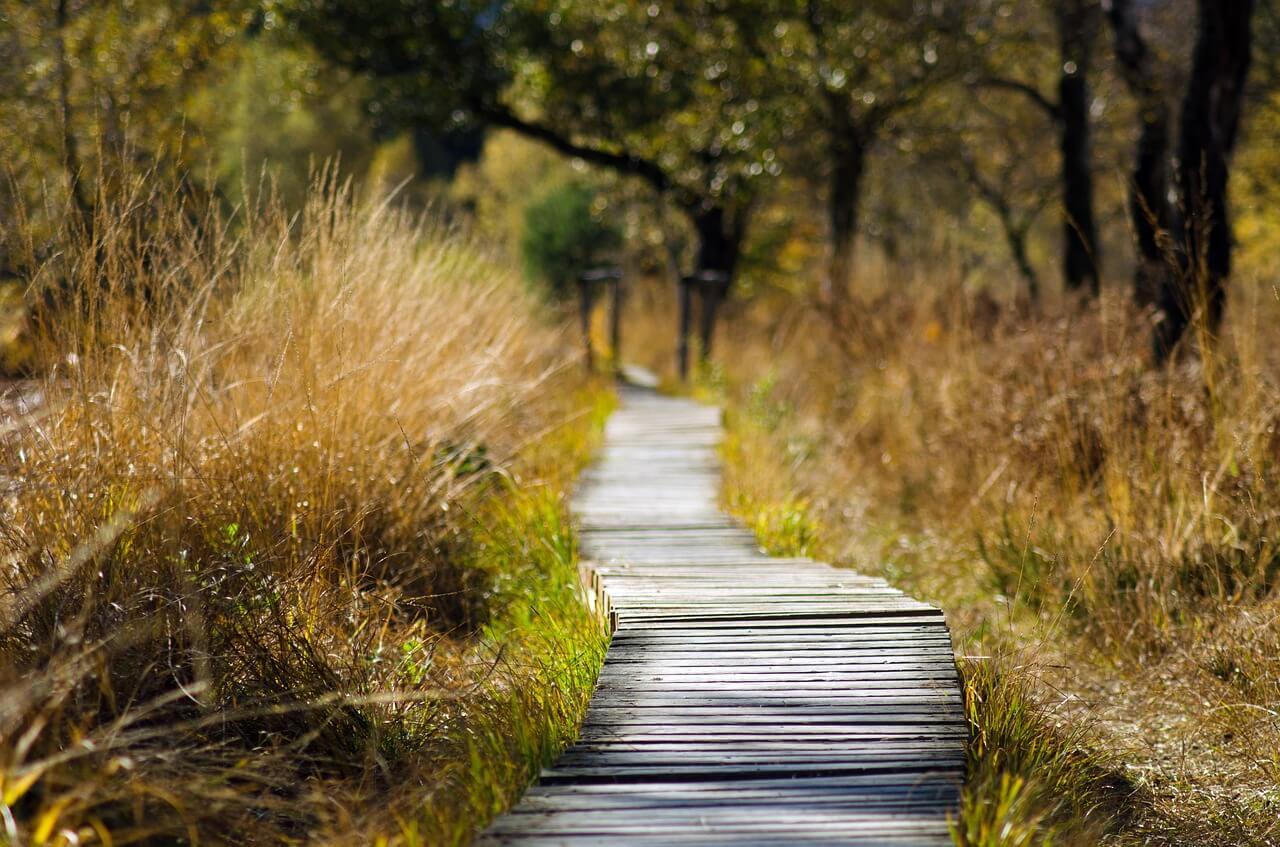 Depressão psicótica | Causas, Sintomas e Tratamento