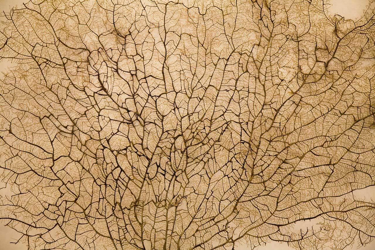 Displasia fibromuscular   Causas, Sintomas e Tratamento