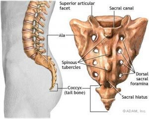 Dor no Cóccix e a sua Anatomia