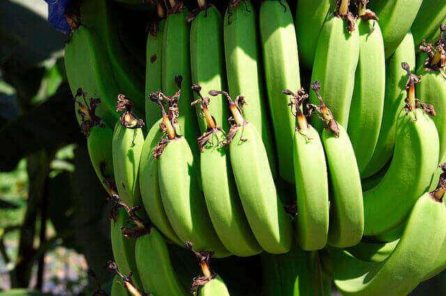 Dor no estômago depois de comer banana
