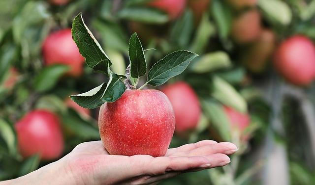Dor no estômago depois de comer maçã