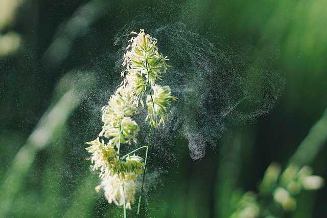 Os efeitos da exposição prolongada à alergia