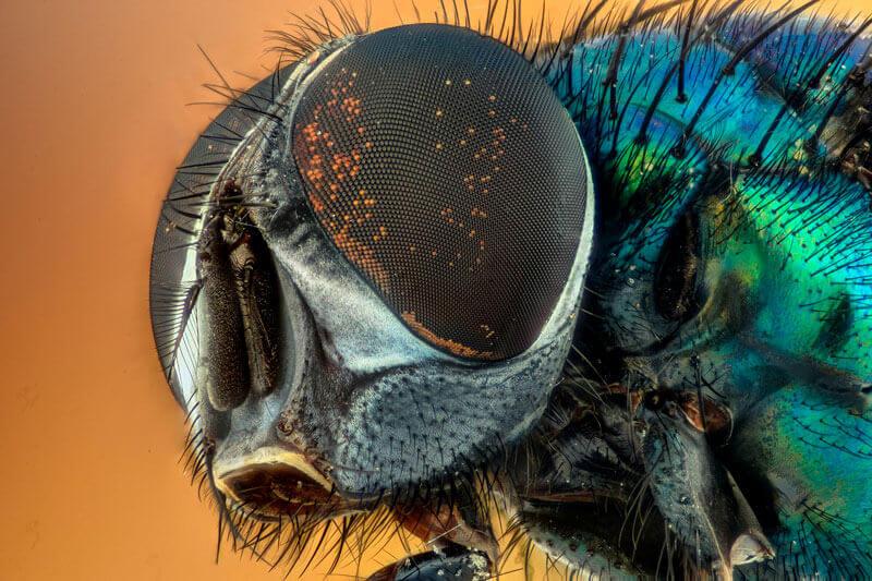 Febre Amarela - Sintomas e Prevenção do Mosquito Aedes Aegypti