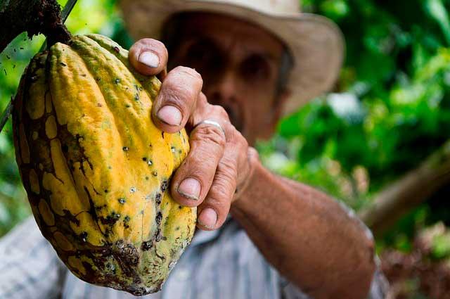 Flavonoides do cacau associados com melhora da memória em idosos