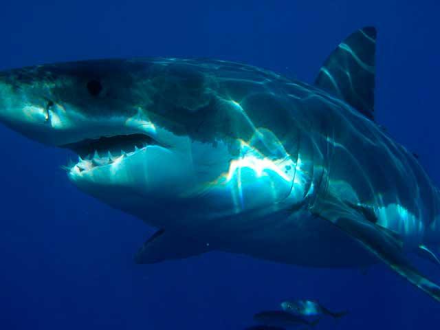 Fobia de tubarão