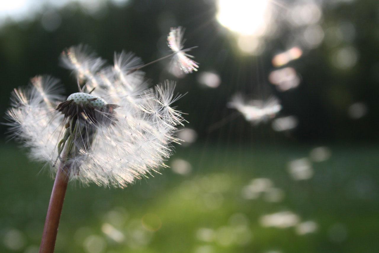 Maneiras de fazer exercício fora de casa com alergias