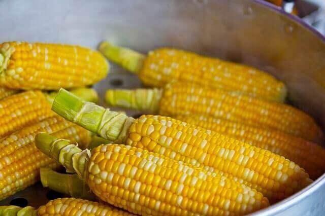 Milho e proteínas   O milho tem proteínas