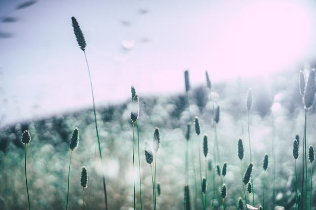 11 Mitos e Verdades sobre a Alergia