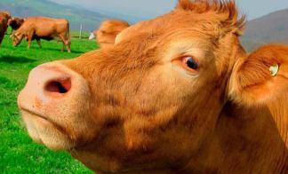 O Melhor Leite sem ser Leite de Vaca