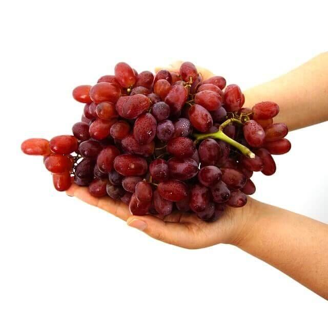 O que as uvas fazem com seu corpo?