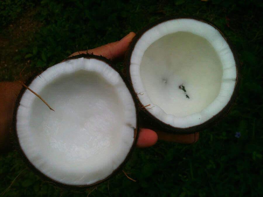 Óleo de coco para a pele