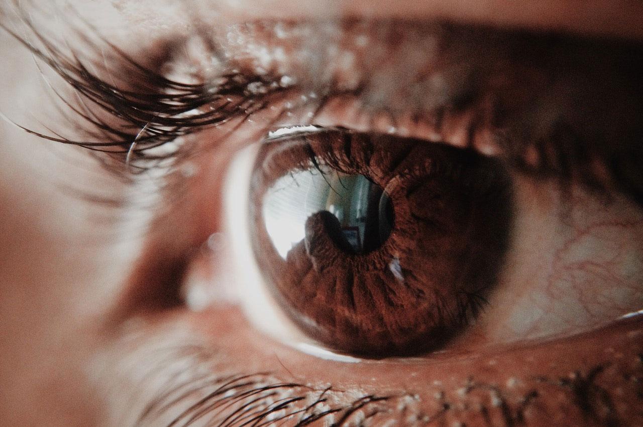 Partes do cérebro que controlam a visão