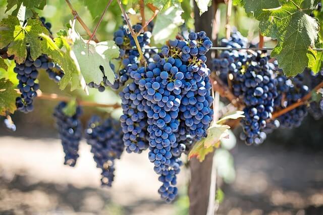 6 razões para tomar um pequeno copo de vinho todo dia