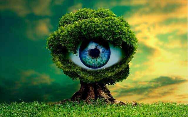 Seus olhos são a janela para o seu cérebro