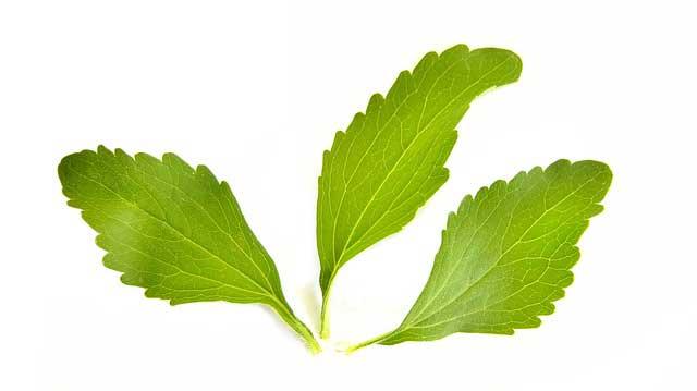 Stevia Causa Diarreia? Como usar Estévia na Dieta?