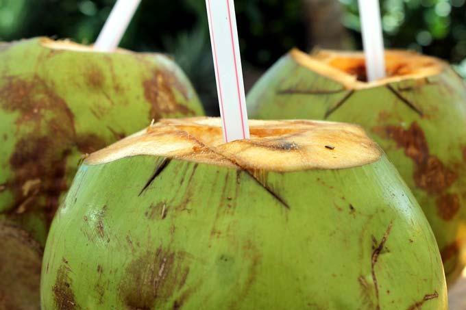 8 Razões Incríveis Quando Você Bebe Água De Coco Por Uma Semana
